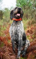 VÝCVIK PSŮ Myslivost a lovectví - LOKÁTOR SD BEEPER SPORTDOG SPORTDOG - Potřeby pro lovecké psy