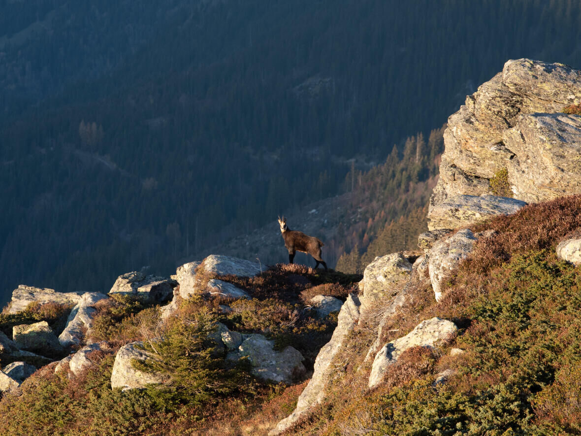 OBSERVING WILDLIFE IN THE MOUNTAINS