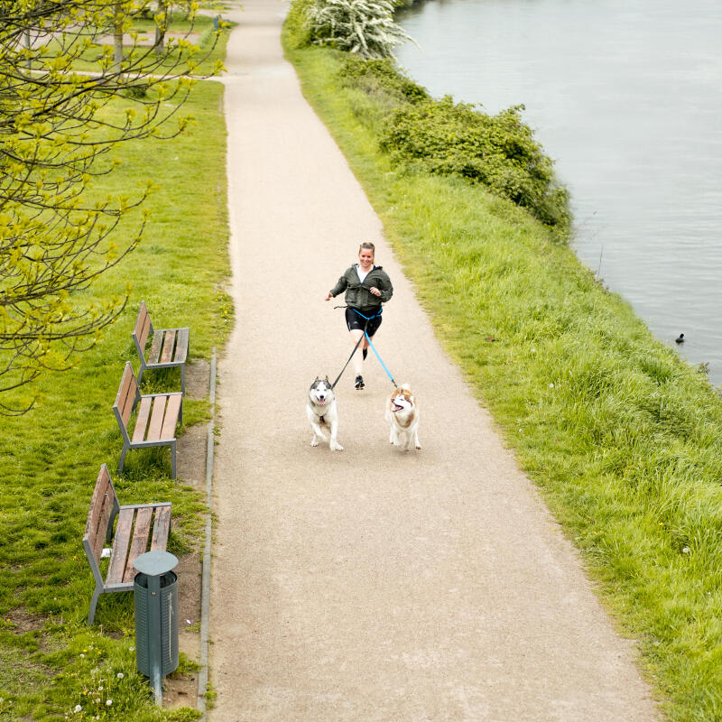 Comment courir avec son chien ? Nos conseils pour débuter