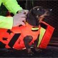 OCHRANNÉ VESTY A SIGNALIZAČNÍ DOPLŇKY NA PSY Myslivost a lovectví - OCHRANNÁ VESTA DOG ARMOR V2 CANIHUNT - Potřeby pro lovecké psy