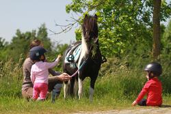 Rijbroek voor ponyrijden - 214958