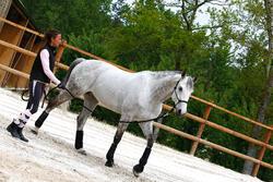 Set ethologisch halster + halstertouw Whisperer pony en paard zwart - 21697