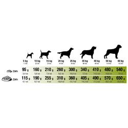 Alimentation chien Adult Regular 2kg