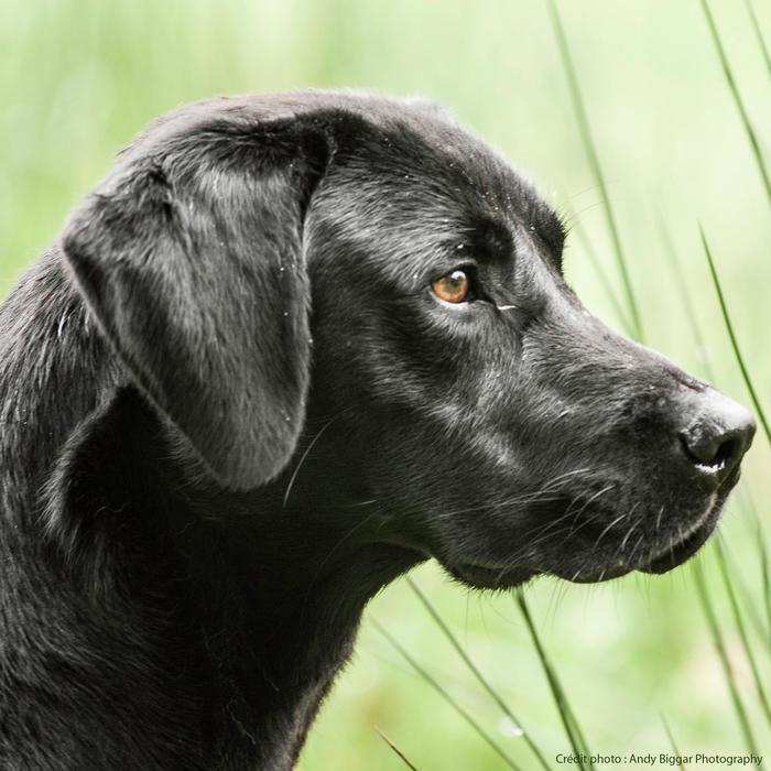 Hondenvoer Adult Regular 2 kg
