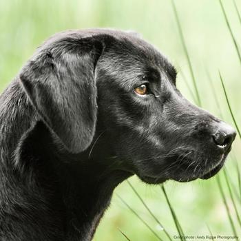 Hundefutter Adult Regular 12 kg