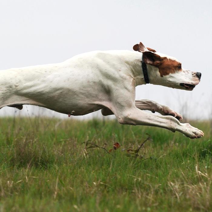 Hondenvoer Adult Intense 12 kg - 273206