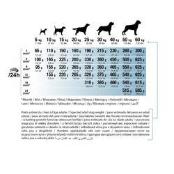 Alimentación perro Junior Growth 2 kg