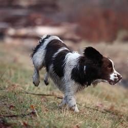 Hundefutter Adult Active 2 kg