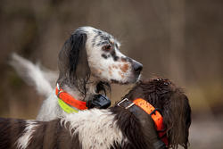 Hondenhalsband 300 - 286093