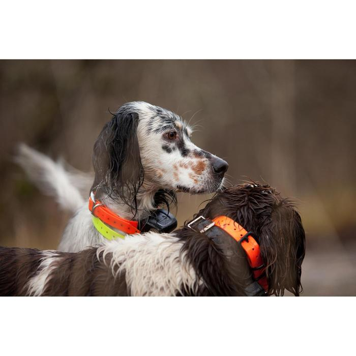 Hondenhalsband 300 roze