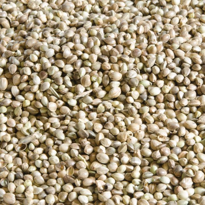 Graines de pêche CHÈNEVIS 5 kg - 367265