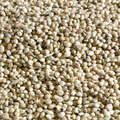 CARP BAITS, BAITING EQUIPEMENT Fishing - Hemp Seed 5kg CAPERLAN - Carp Fishing