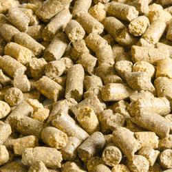 Angelfutter Karpfenangeln Pellets Babymais/Fischmehl 10 mm 5 kg