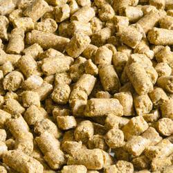 Pellets Gooster BBC Hanfsamen 10 mm 5 kg Karpfenangeln