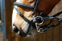 Pelhamriempjes ruitersport zwart - maat pony en paard - 375771