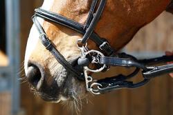 Pelhamriempjes ruitersport zwart - maat pony en paard - 375772