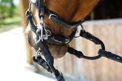 Pelhamriempjes ruitersport zwart - maat pony en paard - 375773