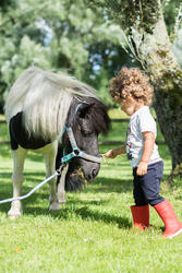 Rijbroek voor ponyrijden - 397199