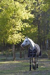 Buitendeken Allweather 300 1.000 D kastanjebruin - pony en paard - 406227