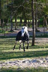 Buitendeken Allweather 300 1.000 D kastanjebruin - pony en paard - 406229