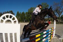 Hoofdstel + teugels Edimburgh ruitersport - pony en paard - 414980