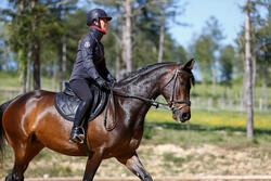 Hoofdstel + teugels Edimburgh ruitersport - pony en paard - 414981
