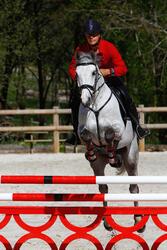 Hoofdstel + teugels Edimburgh ruitersport - pony en paard - 414983