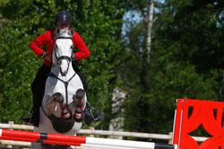 Hoofdstel + teugels Edimburgh ruitersport - pony en paard - 414984