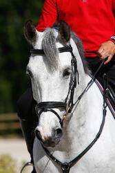 Hoofdstel + teugels Edimburgh ruitersport - pony en paard - 414985