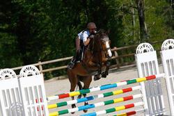 Hoofdstel + teugels Edimburgh ruitersport - pony en paard - 414990