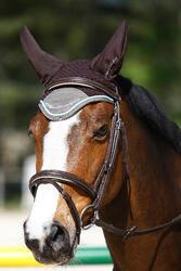 Hoofdstel + teugels Edimburgh ruitersport - pony en paard - 414992