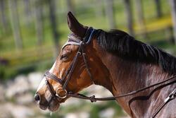 Hoofdstel + teugels Edimburgh ruitersport - pony en paard - 414993