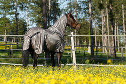 Halster Schooling ruitersport turquoise - pony of paard - 415114