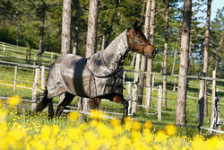 Halster Schooling ruitersport turquoise - pony of paard - 415116