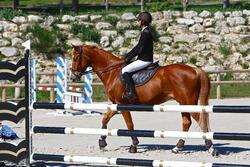 Hoofdstel + teugels Tinckle ruitersport bruin - pony en paard - 416139