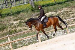 Hoofdstel + teugels Tinckle ruitersport bruin - pony en paard - 416140