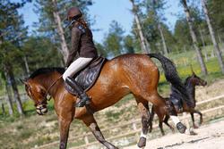 Hoofdstel + teugels Tinckle ruitersport bruin - pony en paard - 416141