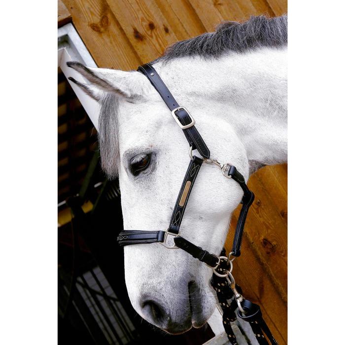 Licol équitation poney et cheval ROMEO cuir - 417005