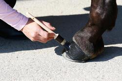 Zwarte hoefzalf voor onderhoud ruitersport paarden en pony's 500 ml - 424008