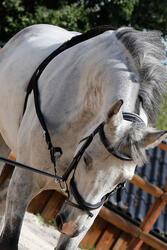 Werksingel ruitersport zwart voor pony's en paarden - 437825