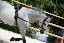Werksingel ruitersport zwart voor pony's en paarden - 437827