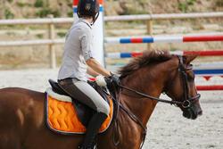 Hoofdstel + teugels Tinckle ruitersport bruin - pony en paard - 438954