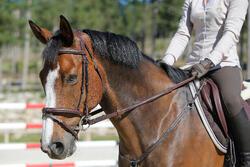 Hoofdstel + teugels Tinckle ruitersport bruin - pony en paard - 438959
