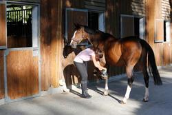 Hoefstraalverzorger ruitersport paarden en pony's 250 ml - 441826