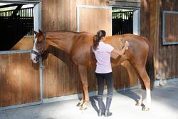 Lotion ruitersport paarden en pony's Star Body Lotion 250 ml - 441828
