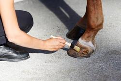 Hoefzalf ruitersport onderhoud geel paarden en pony's 500 ml - 441838