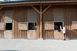 Voedingssupplement voor paarden levertraan - 1 l - 441879