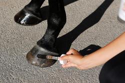 Hoefolie ruitersport paarden en pony's Fougadry 500 ml - 443279