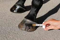 Hoefolie ruitersport paarden en pony's Fougadry 500 ml - 443280