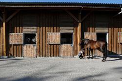 Hoefolie ruitersport paarden en pony's Fougadry 500 ml - 443281